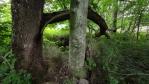 I stromy jako by chtěly promluvit.