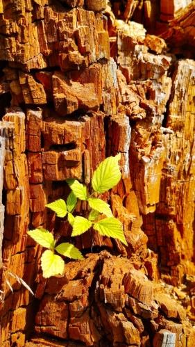 Přeměny dřeva.