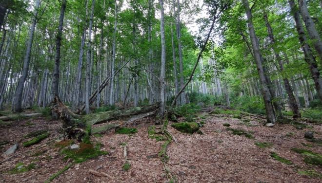 Bučiny Bavorského lesa.