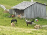 Farma s koňmi při cestě