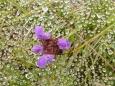 Ososená pavučina s kytičkou