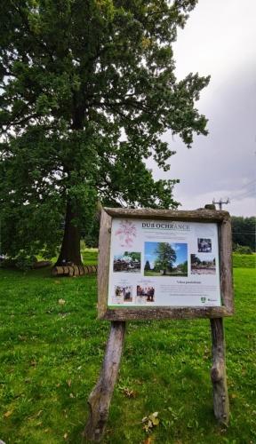 Víska - dub ochránce Višňové, kterou zasáhla v roce 2010 tisíciletá voda.