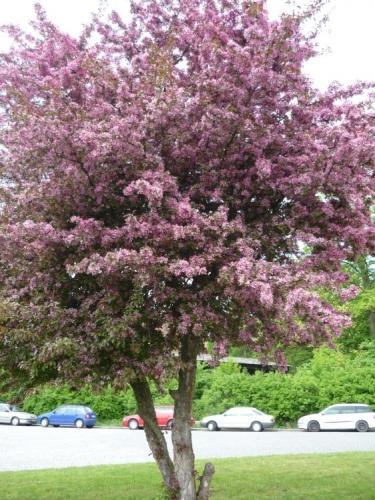 Strom v květnu