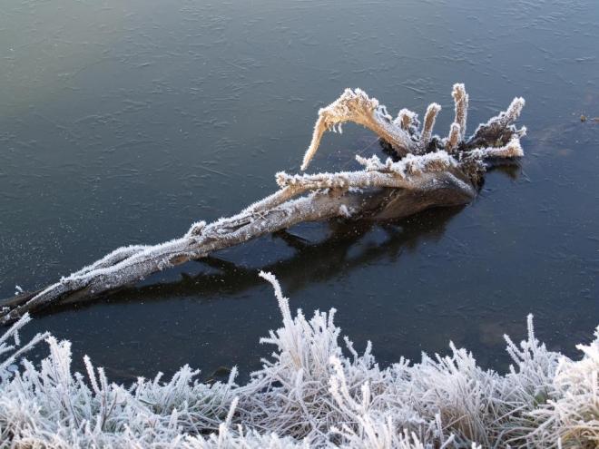 S Bezdrevem těsně sousedí ještě další rybníky, mezi nimi i Přední Topole.