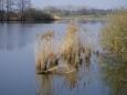 Zbudovský rybník s výhledem na Dívčice. I on bývá rájem hus velkých.