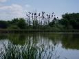 A Brezovec je hned naproti. Známé místo hnízdících volavek láká wild live fotografy.