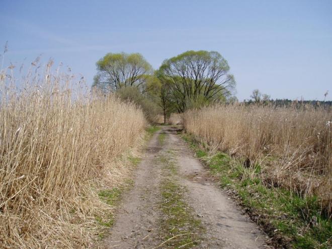 Tak to jsou Zbudovská Blata, krajina nad jiné zadumaná, kde se dá o samotě vnímat ticho (pokud zrovna nepřejíždí kolem vás rychlík do Plzně).