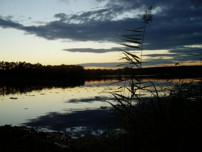 Zlivský rybník (Horný) je začleněn do oblasti Natura 2000 – Českobudějovické rybníky.