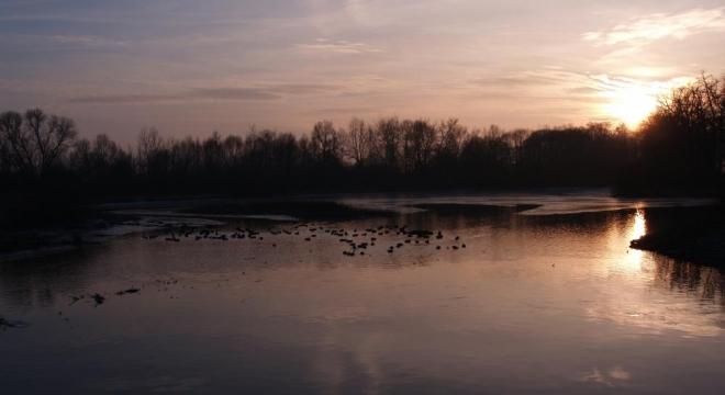 V mrazivých zimních dnech se sem stahují na nezamrzající hladinu divoké kachny.