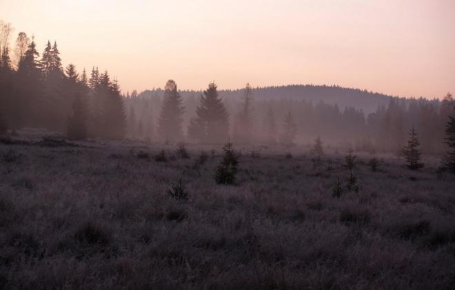 Pokračujeme dál, jeleni jsou slyšet již ze všech stran a za chvíli již vidíme pět laní i prvního jelena.