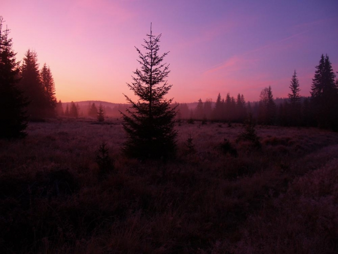 Na fotkách bohužel vidět nic není, ale na videu Lukáš zachycuje jelena velmi pekně a dokonce i řvoucího.