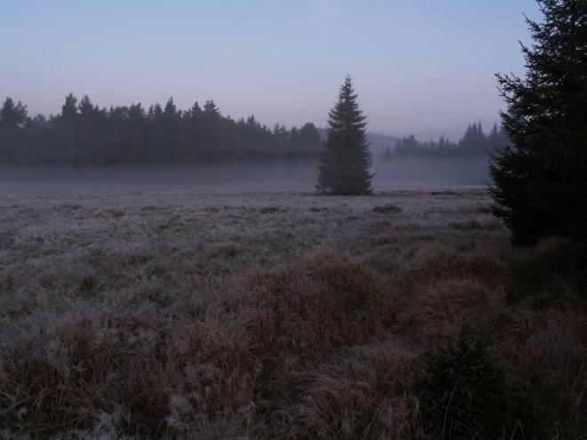 Všude kolem je jinovatka a jeleni se na bílé suché trávě pěkně vyjímají. Celou dobu ani nedutáme, stačí se jen trochu pohnout a jelen mizí. Po hodině se vracíme k autům plni zážitků.