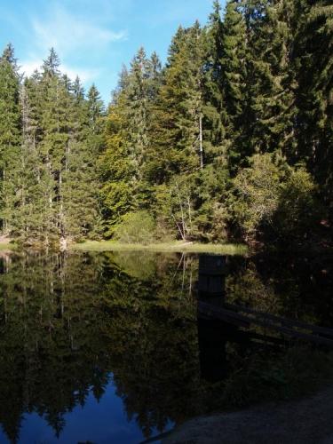 Boubínské jezero, ke kterému přicházíme od parkoviště u Zátoně, je naši první nedělní zastávkou. Tentokrát s námi jedou Honsáci a my se chceme pokusit uvidět nebo alespoň uslyšet jeleny v Boubínské oboře.