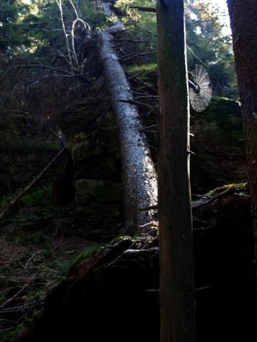 Nedaleko pod vrcholem jsou i pěkné skály, ale mě zaujme víc dobře osvětlená pavučinka. Inu ty moje makra...