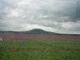 Hora Říp s makovým polem