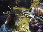 Nádherné rybky