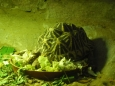 Korytnačka alias želva