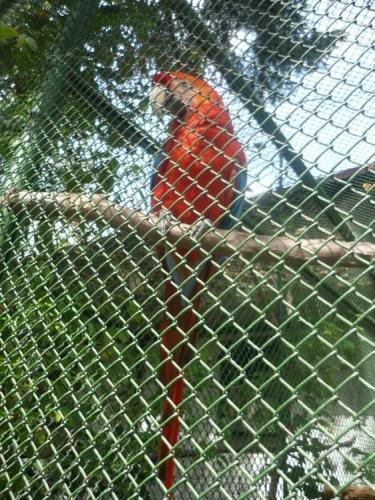 Papoušek co neumí mluvit