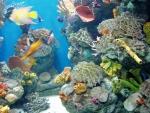 Postupně si procházíme malé akvárka kolem a žasneme nad barvou korálů a malých rybek.