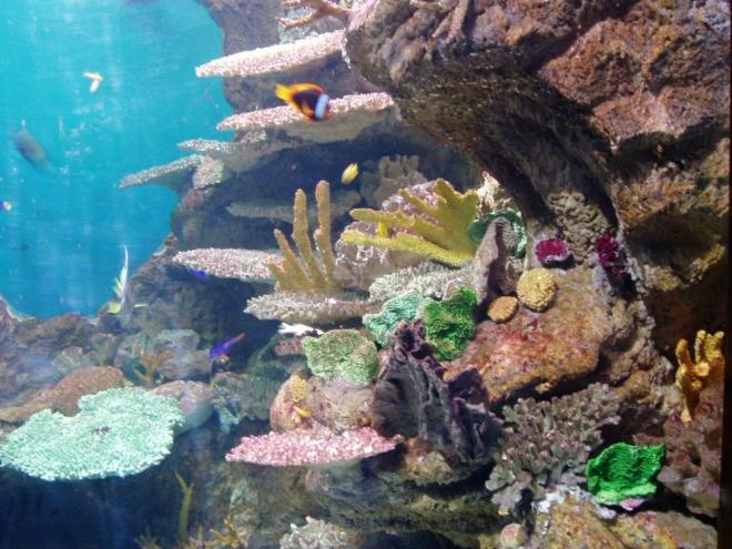 """Zvlášť pro """"suchozemské"""" čechy je akvárium fantastickým zážitkem. Cena vstupného vysoko převyšuje ceny vstupu do jakéhokoli muzea či Gaudího domu. Dospělého vyjde návštěva zhruba na dvacet euro."""