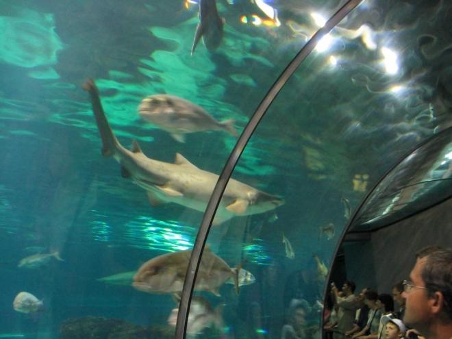 V tom největším akvárku se můžeme dostat až pod bílá břicha žraloků, mant a dalších velkých ryb oceánů. Chlubí se počtem přes 11000 mořských živočichů v šesti milionech litrů vody. Hlavním tunelem pod vodou dlouhým 80 metrů se pohybujeme po pojízdném chodníku.