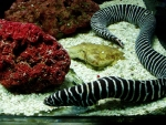 I hady různých tvarů a barev zde lze spatřit z absolutní blízkosti.