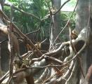 Opičky si hrály