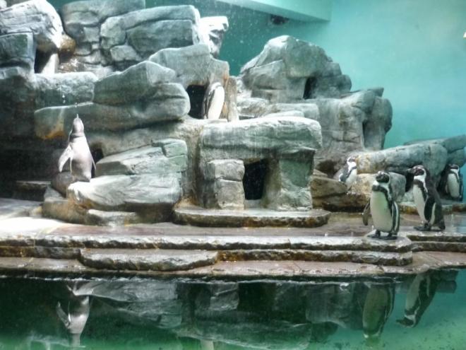 Tučňáci se předváděli