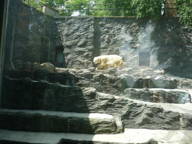 Výběh ledních medvědů