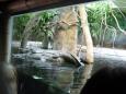 Sblíženě gaviál