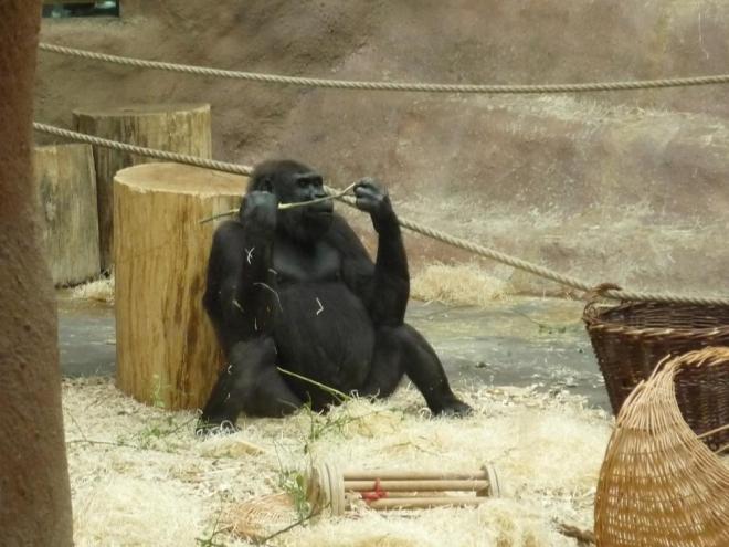 Gorilí otec