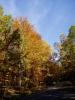 Bučiny na podzim hrají všemi barvami a lemují spoustu cest v celém pohoří až k Tálínu a Albrechticím na jihu.