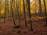 Klikatící se cesta nás nechává v klidu meditovat, nic neruší klid okolního lesa.