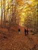 Podstatná část Píseckých hor je chráněna jako přírodní park. Jsou zde chráněné druhy rostlin a dříve často vysazované cizokrajné dřeviny (les Amerika nad Pískem).