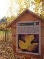 Takže i na liliovník tulipánokvětý vidíme na své pouti. Arboretum sice již zaniklo, ale pozůstatky některých vzácných dřevin, jako je třeba douglaska tisolistá, zde ještě spatřit můžete i vy.
