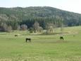 Koně v Hoslovicích