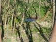 Novosedelský potok s blatouchy
